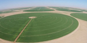 Bekas pelajar UiTM berjaya mengubah padang pasir tandus menjadi sebuah ladang gandum yang subur di Sudan